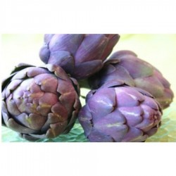 Artichaut violet (italie)